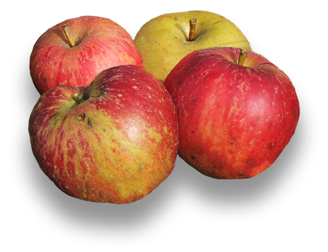 Apples Isolated on transparent background