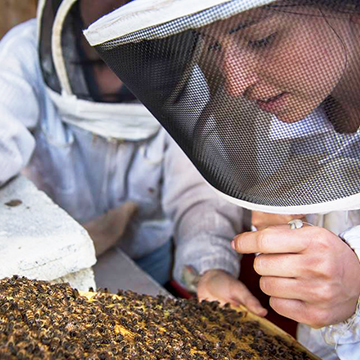 Apiarists tending bees for our honey