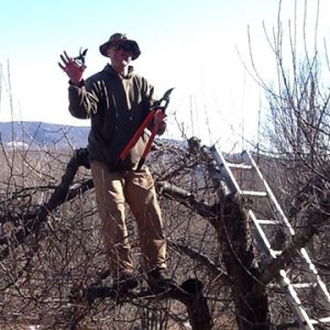 Team Member: David G pruning trees in the orchard