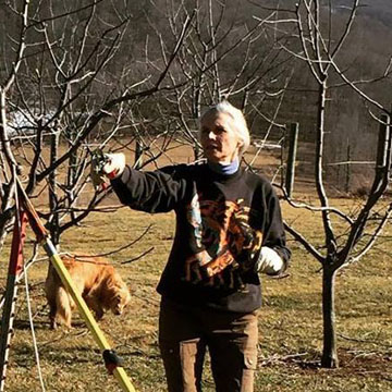 Team Member: Susan G in the Orchard
